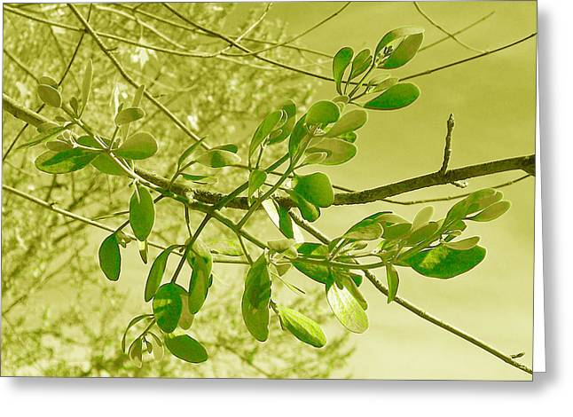 Green Leaves Greeting Card by Russ Mullen