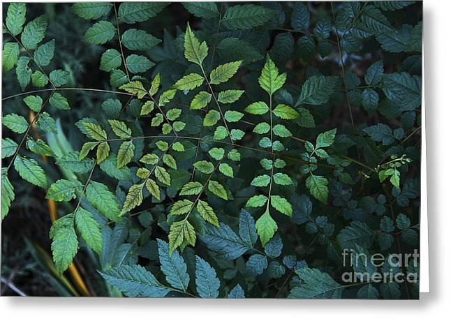 Green Leaves Greeting Card by Viktor Savchenko