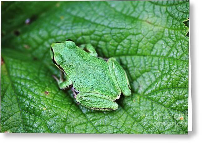 Green Like Me Tree Frog Greeting Card