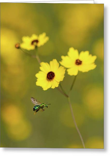 Green Metallic Bee Greeting Card