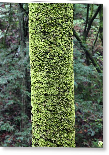 Big Sur California Greeting Cards - Green moss covered tree Greeting Card by Pierre Leclerc Photography