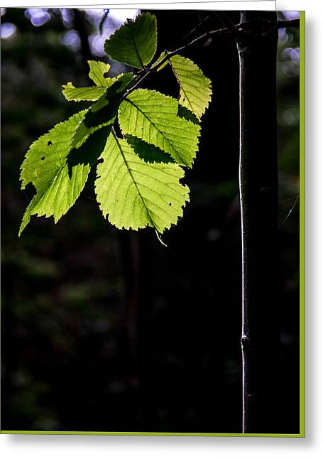 Greeting Card featuring the photograph Green by Odd Jeppesen