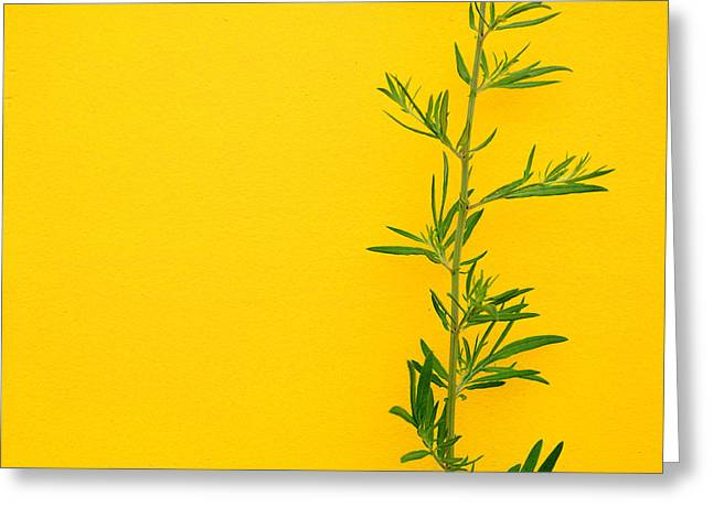 Green On Yellow 5 Greeting Card by Art Ferrier