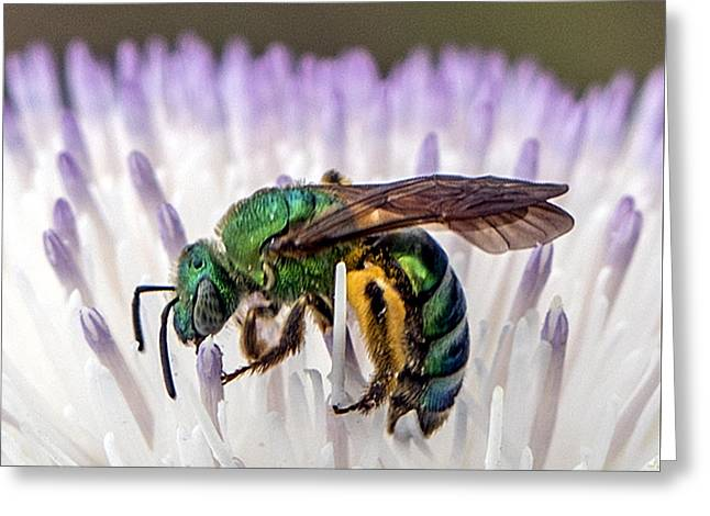 Green Orchid Bee Greeting Card