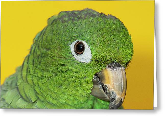 Green Parrot Head Shot Greeting Card