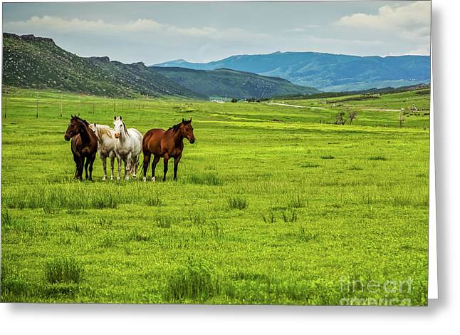 Green Pastures Greeting Card by Jon Burch Photography