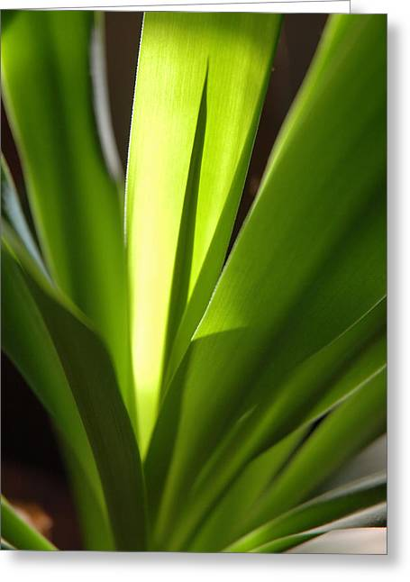 Green Patterns Greeting Card by Jerry McElroy