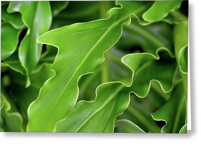 Green Plant Greeting Card by Tamra Lockard