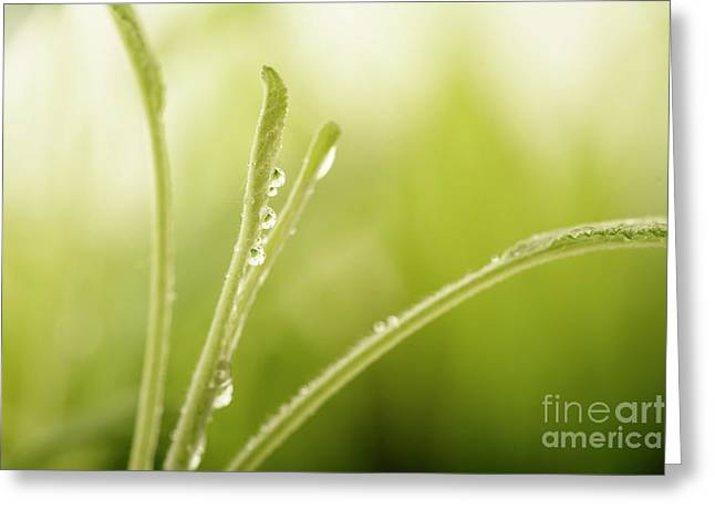 Green Plant With Water Drops Greeting Card by Jelena Jovanovic
