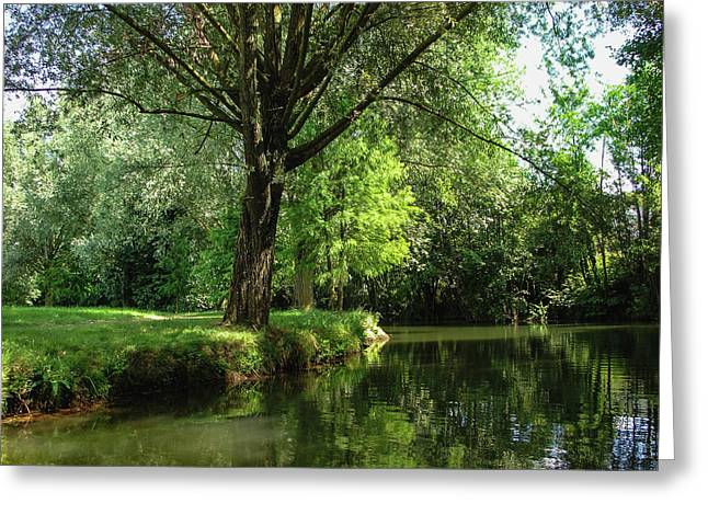 Greeting Card featuring the photograph Green Reflections by Cristina Stefan