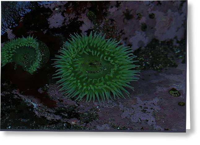 Green Sea Anenome Greeting Card by Dan Sproul