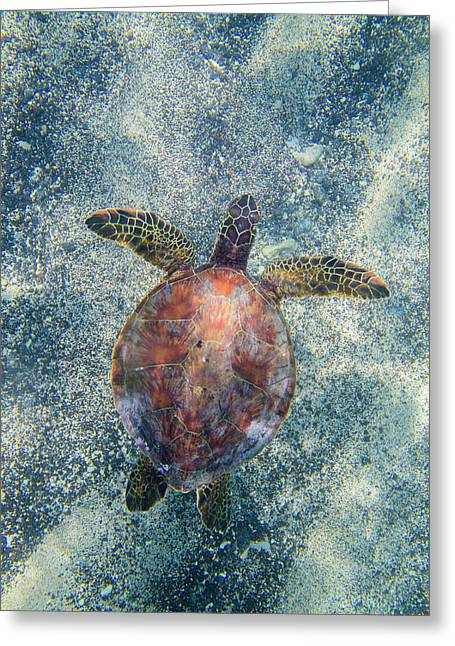 Green Sea Turtle From Above Greeting Card