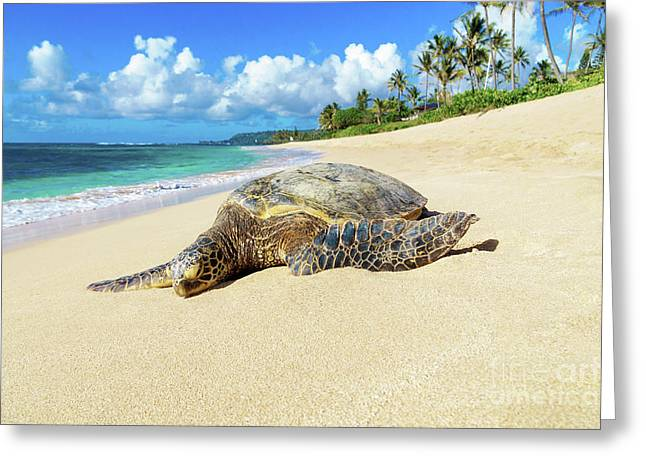 Green Sea Turtle Hawaii Greeting Card