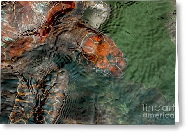Green Sea Turtle Under Water Greeting Card