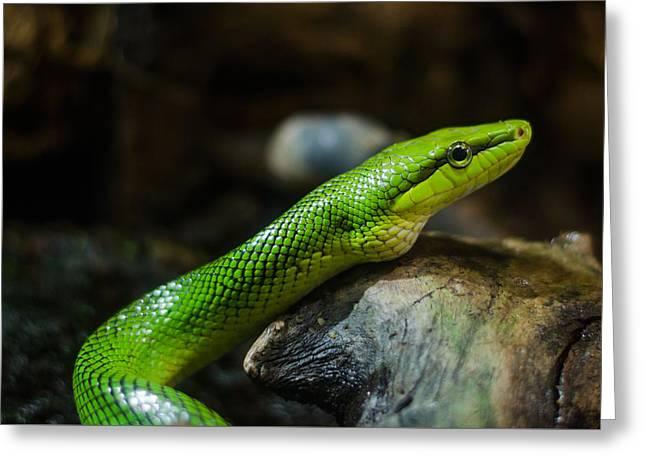 Green Snake Greeting Card by Daniel Precht