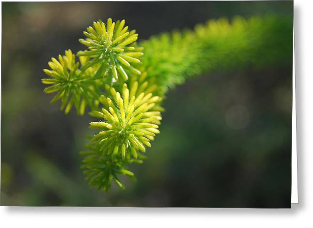 Green Spikes Greeting Card by Nick Petkov