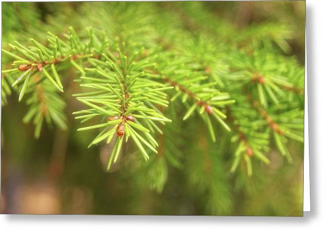 Green Spruce Branch Greeting Card