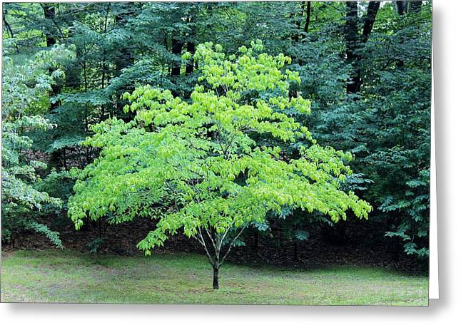Green Standout Tree Greeting Card