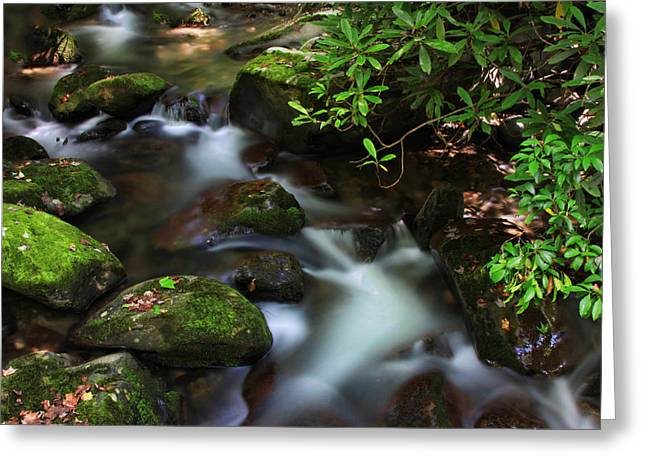 Green Stream Greeting Card