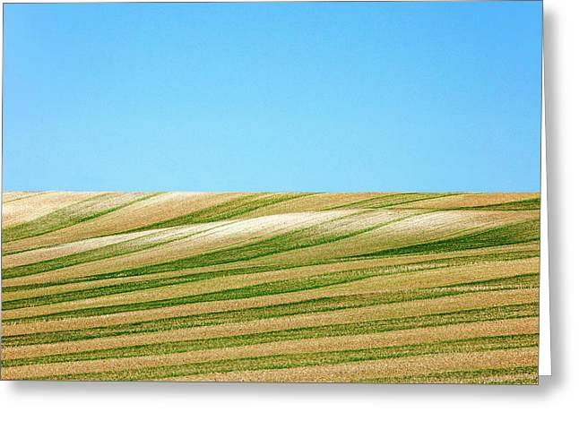 Green Stripes Greeting Card by Todd Klassy