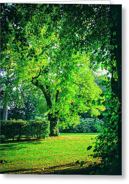 Green Summers Day Greeting Card by Niel Morley