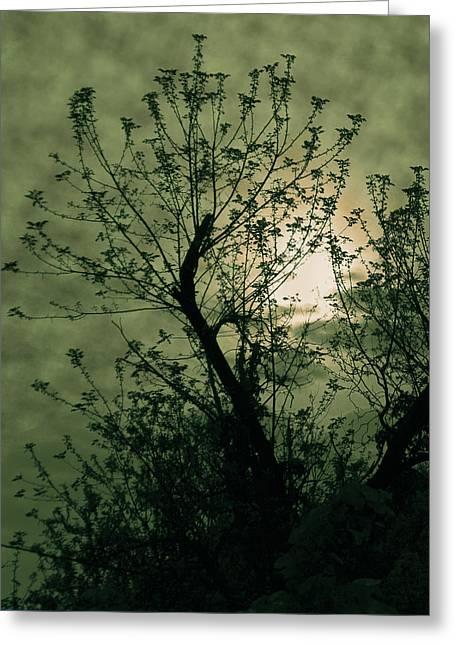 Green Sunset Greeting Card