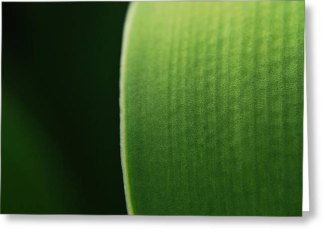 Green Greeting Card by Susette Lacsina