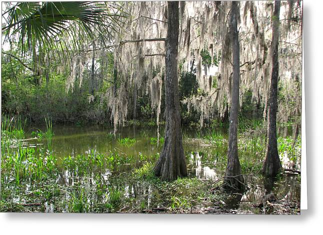 Green Swamp Greeting Card by Peg Urban