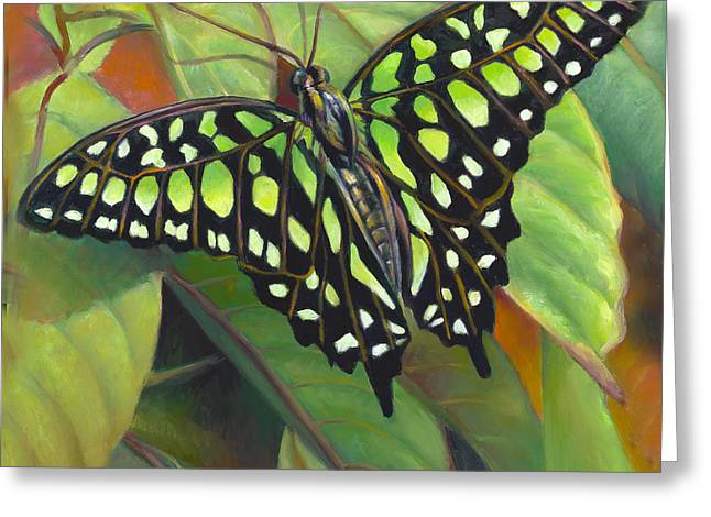 Green Tailed Jay Butterfly Greeting Card by Nancy Tilles