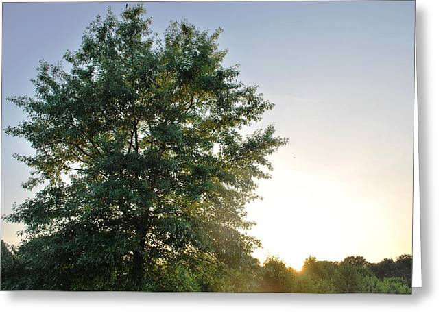 Green Tree Bright Sunshine Background Greeting Card