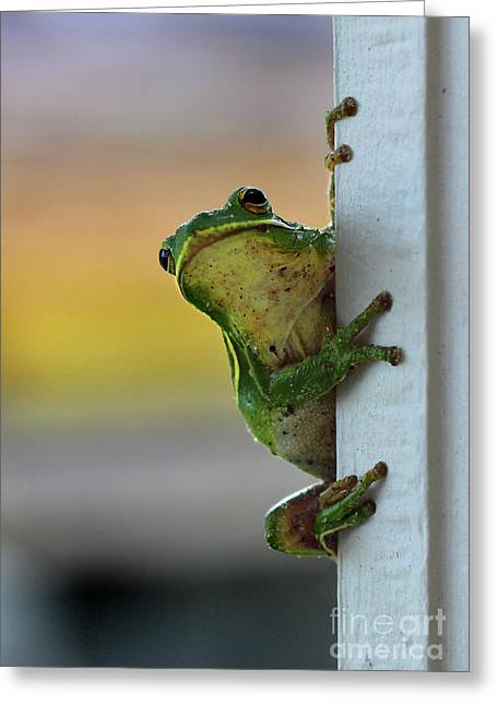 Green Tree Frog  It's Not Easy Being Green Greeting Card