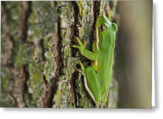 Green Tree Frog Thinking Greeting Card by Douglas Barnett
