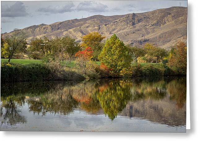 Green Tree Pond Reflection Greeting Card by Brad Stinson