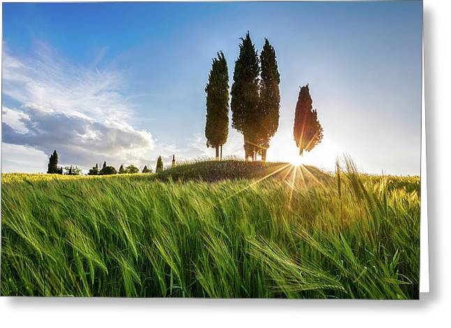 Green Tuscany Greeting Card by Evgeni Dinev