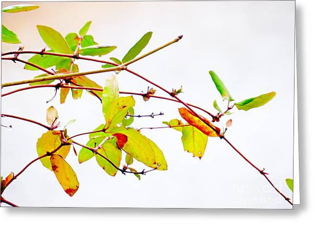 Green Twigs And Leaves Greeting Card