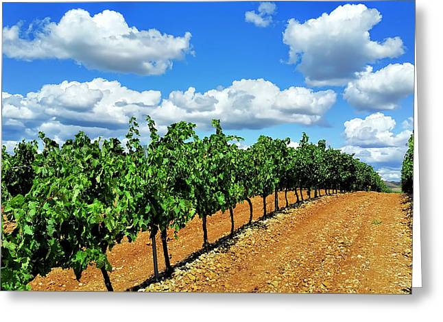Green Vineyard White Clouds Greeting Card