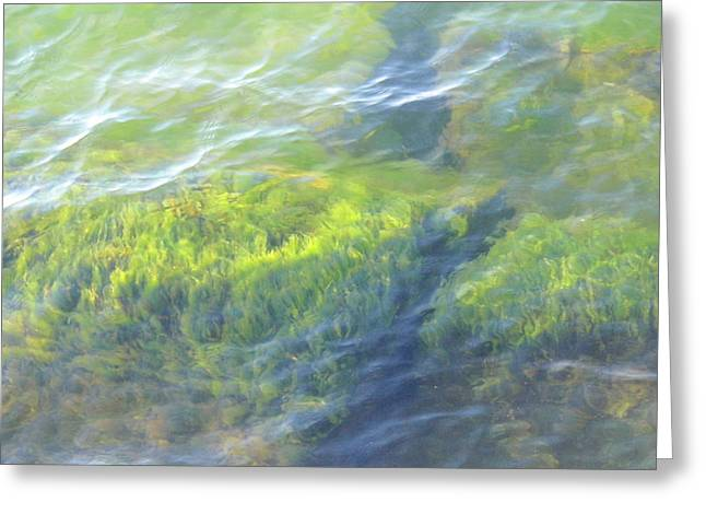 Greeting Card featuring the photograph Green Water by Beth Akerman