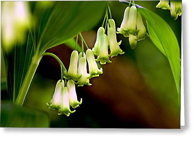 Green White Bells Greeting Card by JoAnn Lense