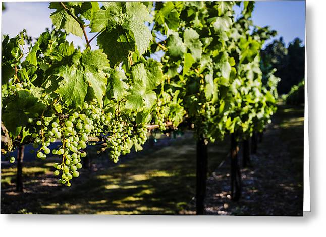 Green Wine Grapes 2 Greeting Card by Pelo Blanco Photo