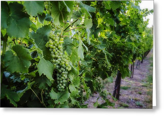 Green Wine Grapes 3 Greeting Card by Pelo Blanco Photo