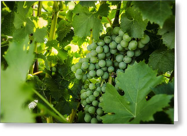 Green Wine Grapes Greeting Card by Pelo Blanco Photo