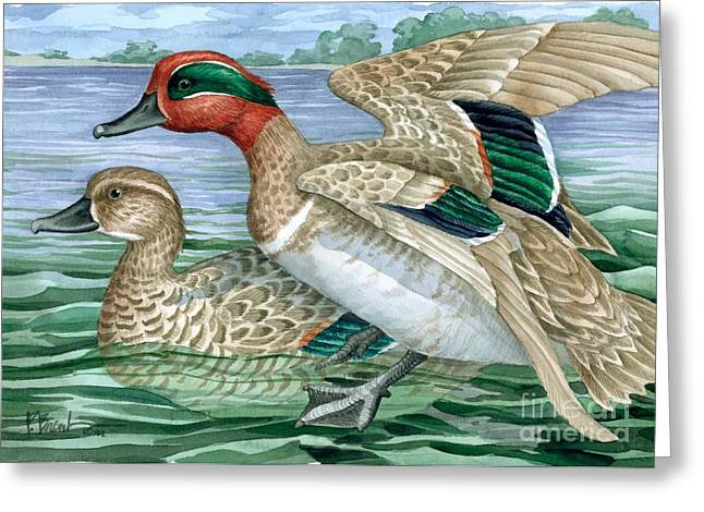 Green Winged Teal Greeting Card by Paul Brent