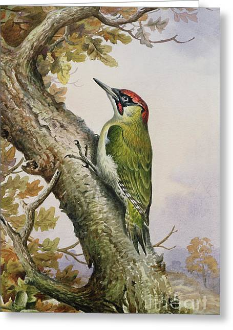 Green Woodpecker Greeting Card by Carl Donner