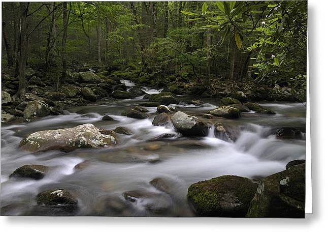 Greenbrier In The Great Smoky Mountains Greeting Card by Darrell Young