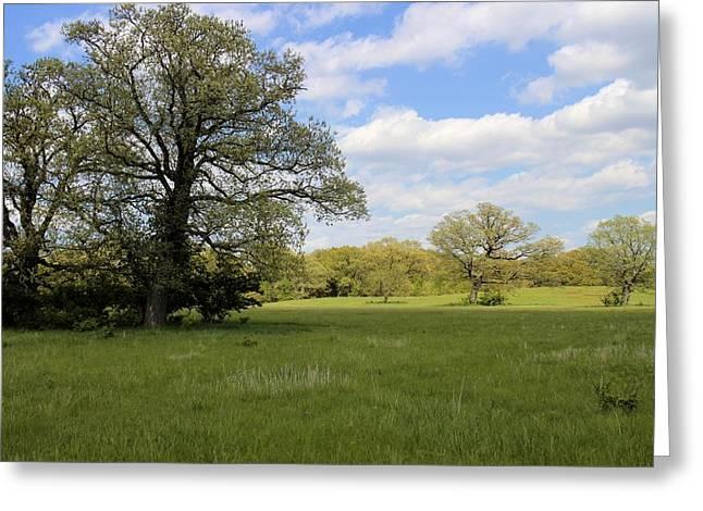 Greener Pastures Greeting Card by Scott Kingery
