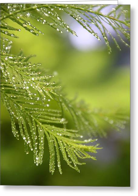Greenery 1318 Greeting Card by Carolyn Stagger Cokley