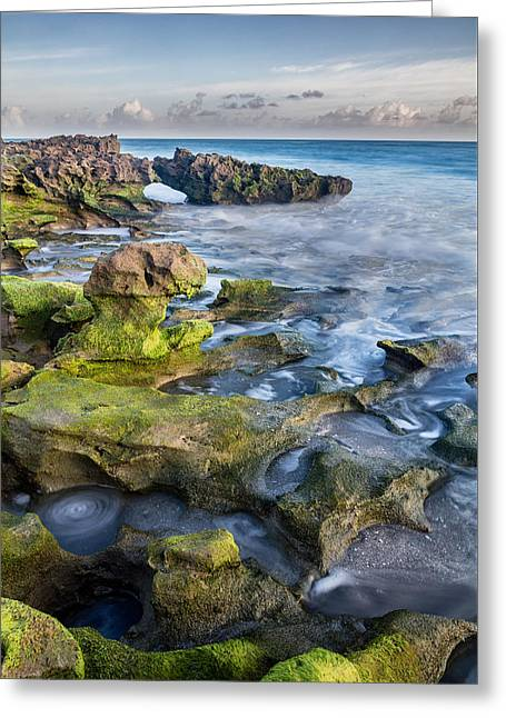 Greenery In Coral Cove Greeting Card by Andres Leon