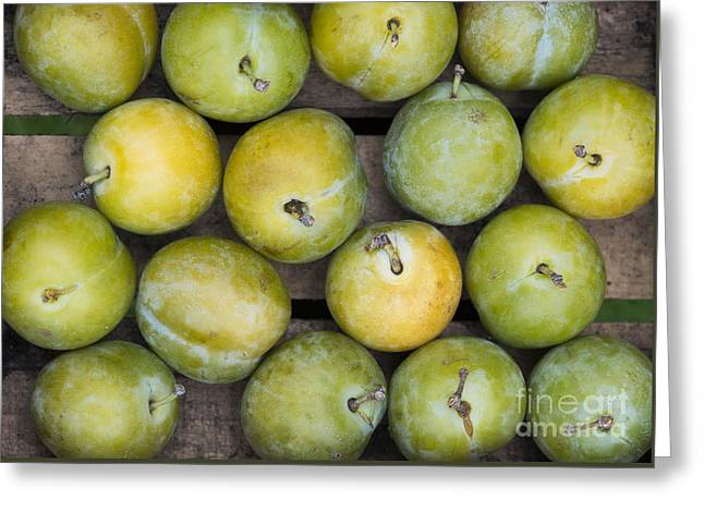 Greengage Harvest Greeting Card by Tim Gainey