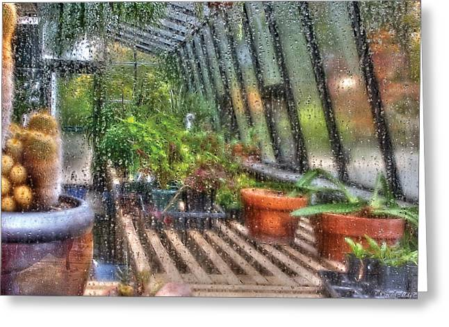 Greenhouse - In A Greenhouse Window  Greeting Card by Mike Savad