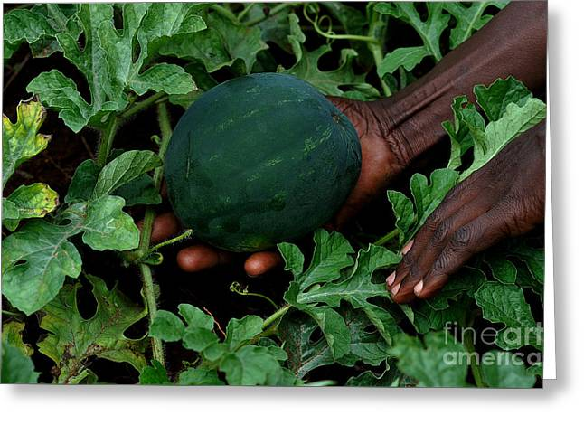 Greening Hands Of Africa Greeting Card